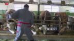 Video «Thurgauer Milchbauern wollen weiterhin Milchpreisstützung» abspielen