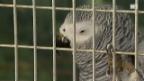 Video «Alles andere als tiergerecht» abspielen