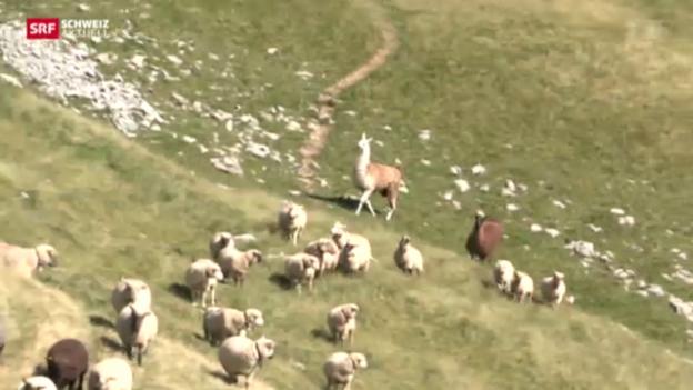 Video «Schweiz aktuell vom 28. Juni 2013» abspielen