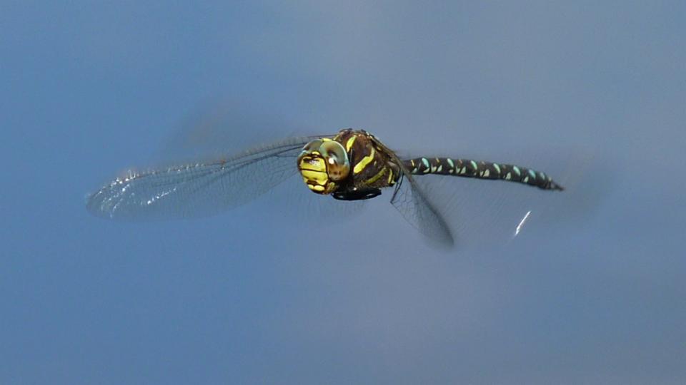 NMG: In der Haut der Libelle (2/2)