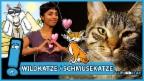 Video «Wie wurde die Katze zu unserem Haustier?» abspielen