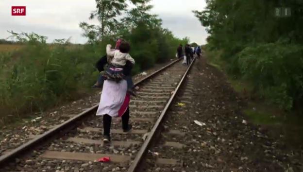 Video «Flüchtlingsdrama an Ungarns Grenze» abspielen