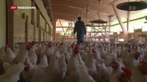 Video «Verschärfte Massnahmen wegen Vogelgrippe» abspielen
