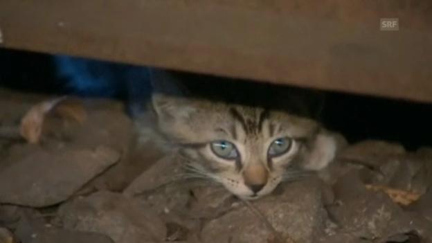 Video «Katzen legen U-Bahn lahm (unkomm.)» abspielen