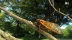 Video «Die Welt der Krabbler» abspielen