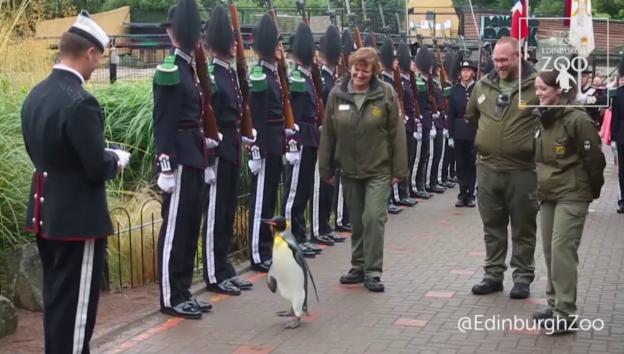 Video «Pinguin Sir Nils Olav II.» abspielen