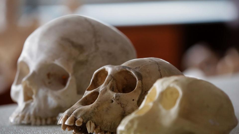 War der erste Mensch ein Europäer?