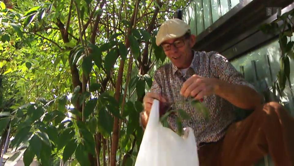 Maurice Maggi bei seiner Ernte