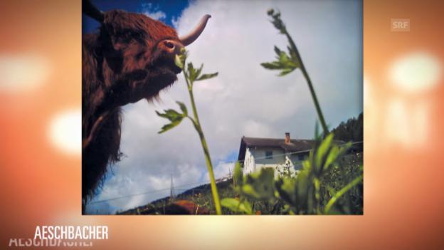 Video «Sophies Welt: Beispiele von Fotografien der Cowcam» abspielen