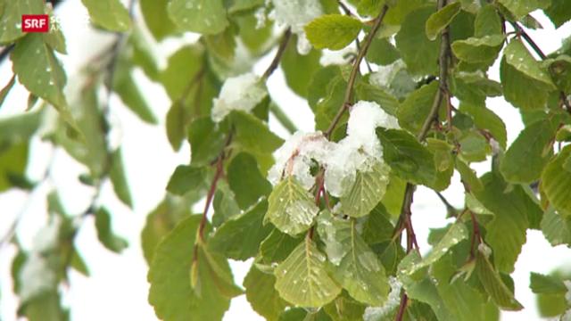 Schnee im Walliser Frühling