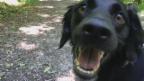 Video «Daisy Boser: Patricias Hund plaudert aus dem Nähkästchen» abspielen
