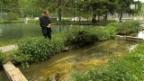 Video «Nachhaltige Zucht – Raubfische als Vegetarier» abspielen