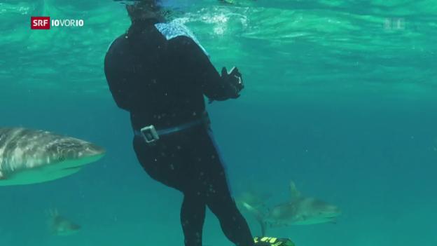 Video «Erich Ritter: Pionier der Haiforschung» abspielen