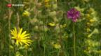 Video «Artenvielfalt nimmt weltweit rasant ab» abspielen