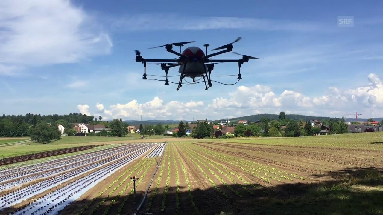 Ein Drohne sprüht Pflanzenschutzmittel
