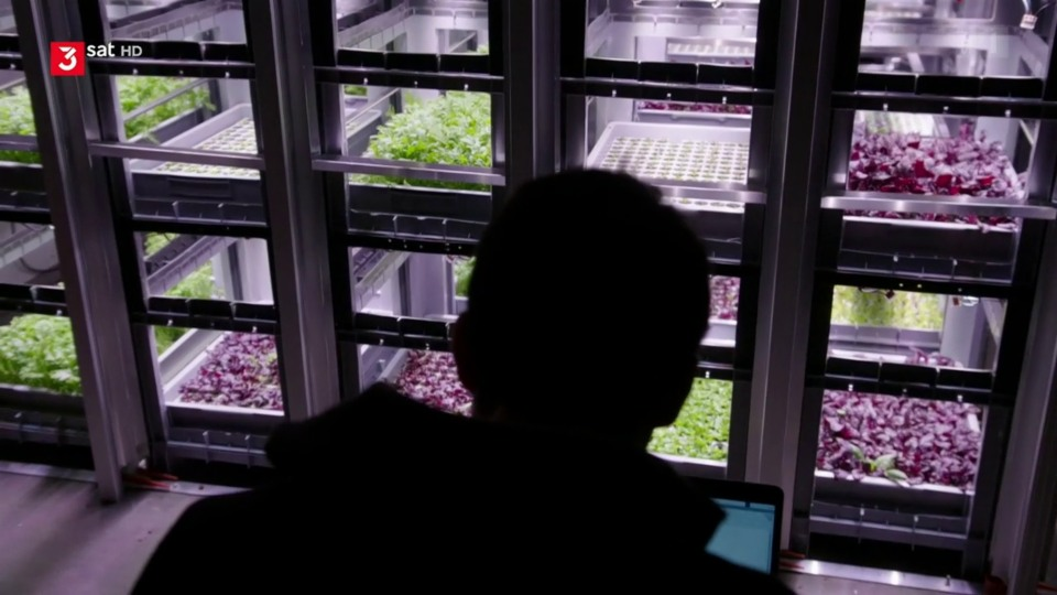 Vertical Farming: Salat von der Roboterfarm
