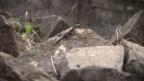 Video «Eidechsen in Altstetten» abspielen
