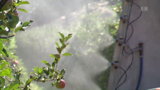 Video «Pestizide: Kritik am Reduktionsplan des Bundes» abspielen
