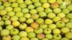 Video «Edle Schweizer Äpfel für die Welt» abspielen