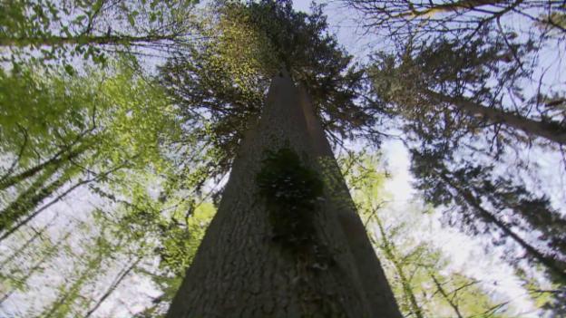 Video «Kurze Natur-Pausen wirken» abspielen