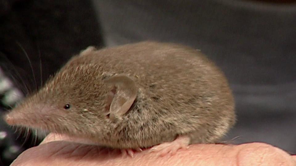 Tierisches Jahr: Mäuse im August (5/6)