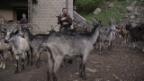 Video ««SRF bi de Lüt – Wunderland»: Outtake mit Geissli» abspielen
