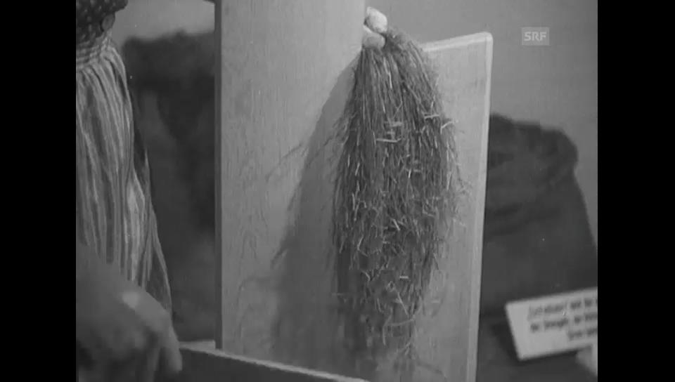 Hanf- und Flachsgewinnung - Olma 1949 (Schweizer Filmwochenschau)
