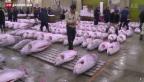 Video «Tokio verlegt Touristenattraktion – einen Fischmarkt» abspielen