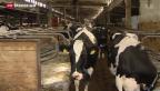 Video «Russlands Importverbot bringt deutsche Bauern in Not» abspielen
