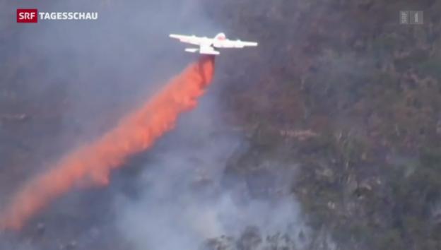 Video «Australien kämpft gegen Waldbrände» abspielen
