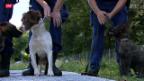 Video «Polizei-Hund für Falschgeld» abspielen
