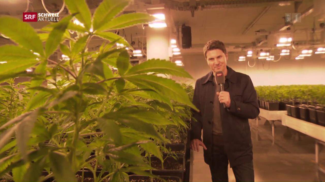 Moderator Otmar Seiler beim Cannabis-Produzent