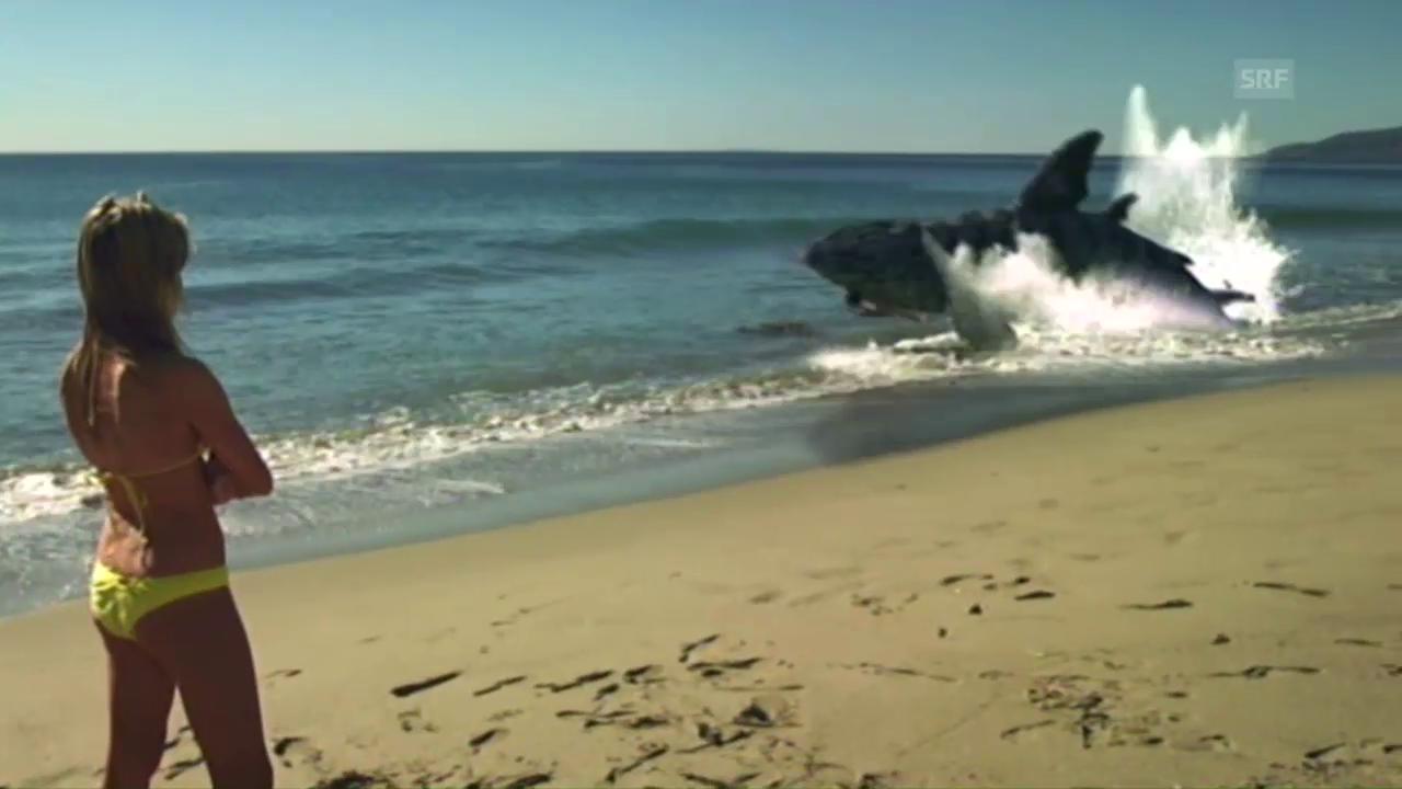 «Sand Sharks»