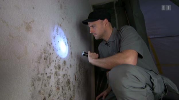 Video «Schimmel – Die grauen Stellen im Haus sind meist ungefährlich» abspielen