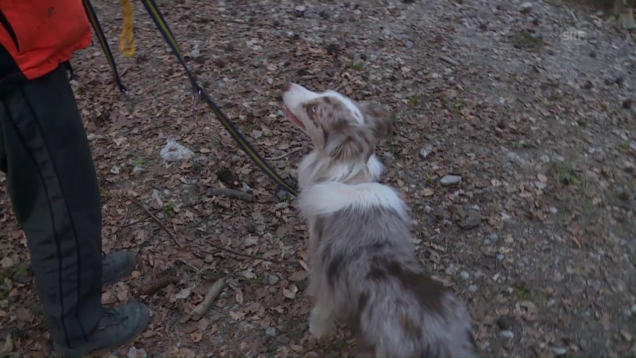 Tatjana Lentze bildet ehrenamtlich Rettungshunde aus