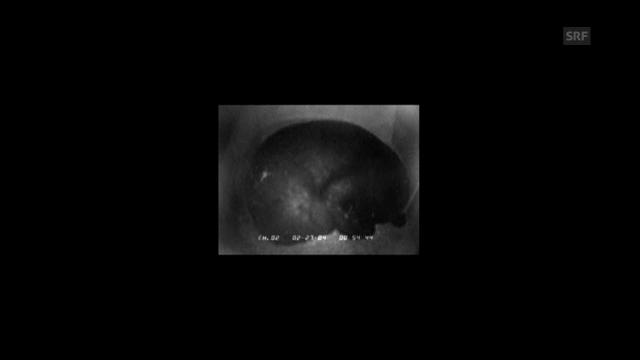 Bären-Schnarchen: Der Atemryhtmus im Winterschlaf