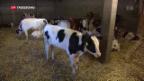 Video «Antibiotika bei Tieren» abspielen