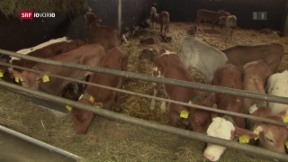 Video «Wie umweltschonend arbeiten die Bauern? » abspielen