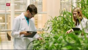 Video «Mega-Deal zwischen Monsanto und Bayer» abspielen