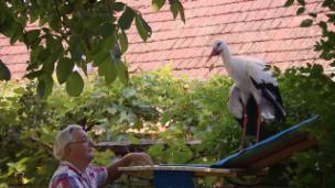 Link öffnet eine Lightbox. Video Der alte Mann und der Storch abspielen.