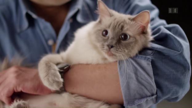 Video «Das geheime Leben der Katzen» abspielen