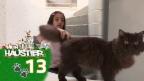 Video «Jasmin und ihre kleinen Kätzchen» abspielen