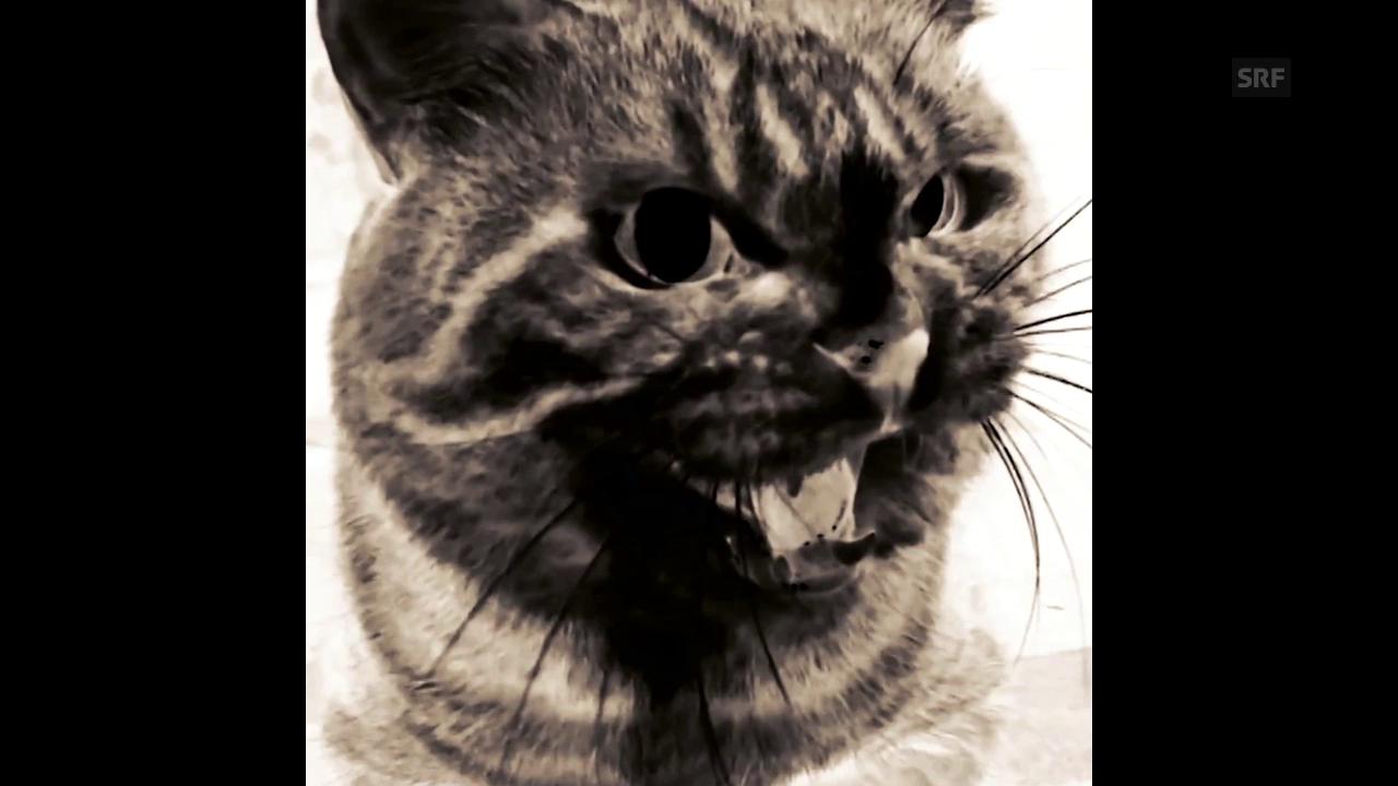 «Die Weltherrschaft»: Die Katzen wollen an die Macht