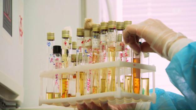 Video «Phagen-Therapie – Mit Viren gegen Bakterien» abspielen
