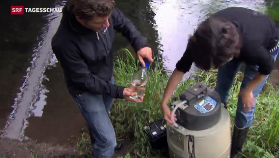 Pestizidcocktail in Schweizer Flüssen