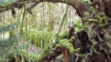 Link öffnet eine Lightbox. Video Das Geheimnis der wilden Wälder abspielen.