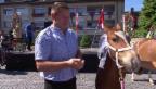Video «Ein prominentes Fohlen in Estavayer-le-Lac» abspielen