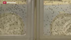 Video «Mit Pestiziden gegen das Zika-Virus» abspielen