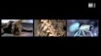 Video «Knacknüsse für Forscher» abspielen