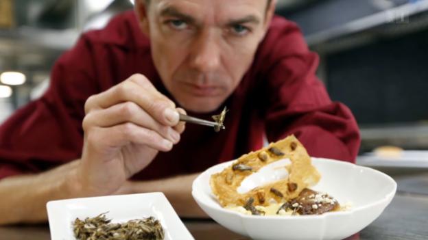Video «Proteine der Zukunft: Was uns vom Insekten-Essen abhält» abspielen